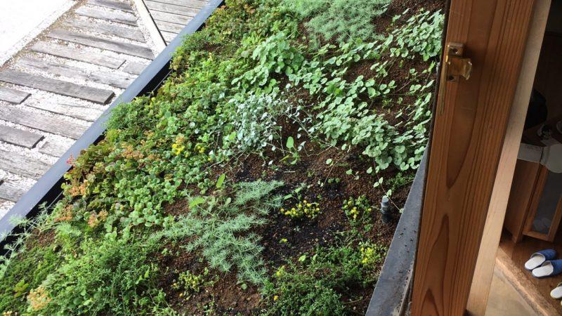 ショールーム屋根緑化
